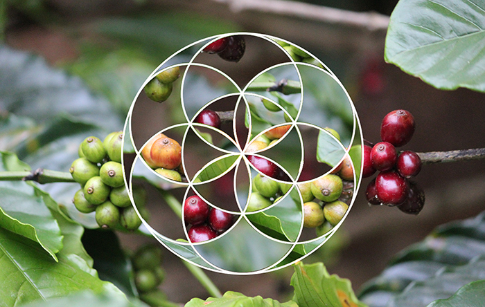 Geometric Photo Edit!