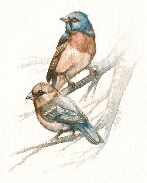 Realistic watercolour illustrations