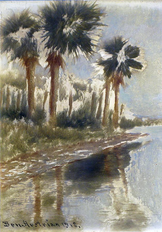Shore Palms