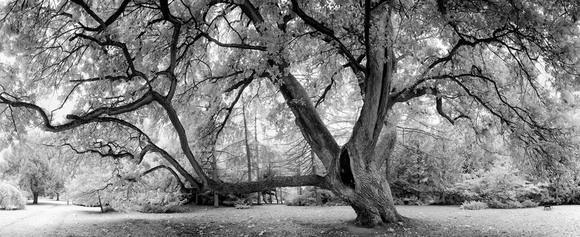 Jack Nicholson Tree