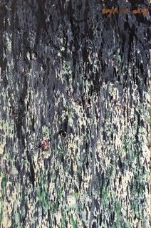 雨中葵 - 1  (Flowers in the Rain - 1) by Hong You Cai 洪有彩