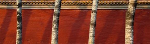 Winter Trees, Forbidden City