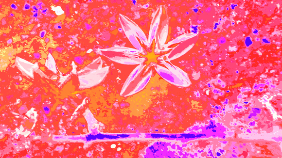 ANISE STAR IN THE RED SKY, 90 x 160 cm