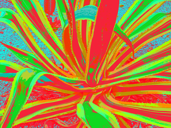 AGAVA, (GREEN-RED), 120 X 160 CM