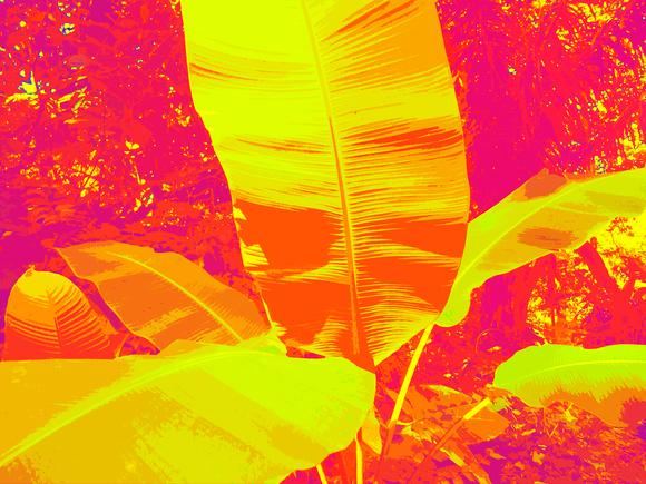 BANANA TREE, (YELLOW), 120 x 160 cm