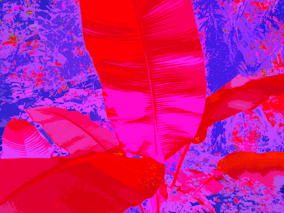 BANANA TREE, (RED), 120 x 160 cm