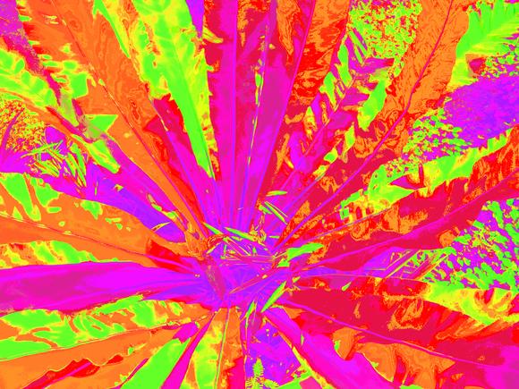 CRAZY, (ORANGE-RED-PURPLE), 120 x 160 cm