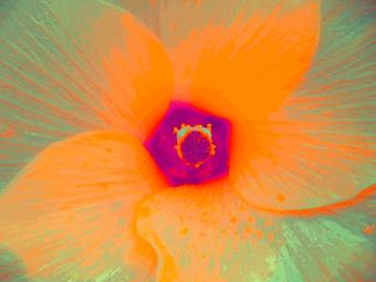 OKRA FLOWER, (ORANGE), 120 X 160 CM