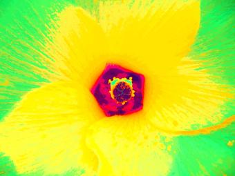 OKRA FLOWER, (YELLOW), 120 x 160 CM