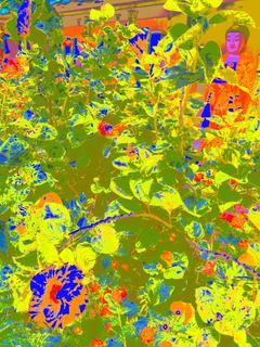 KEK LOK SI GUARDIAN OF HIBISCUS FLOWER & SUN, 160 x 120 CM