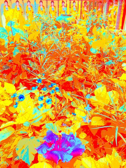 BLUE HIBISCUS FLOWER AT KEK LOK SI, 120 X 160 CM