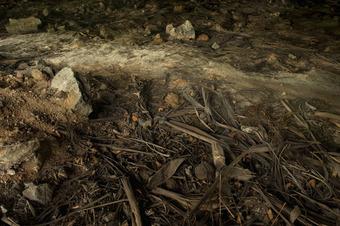 Immergrün | Creeping myrtle | Vinca
