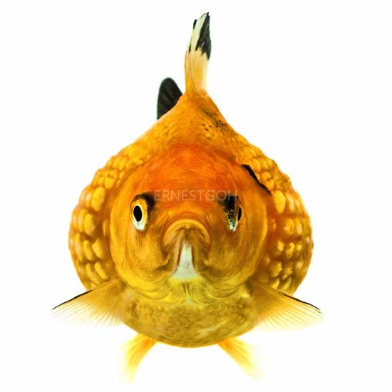 Fish Face 001
