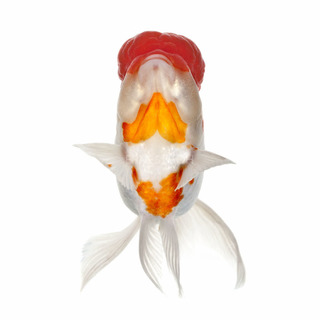Fish Face 007