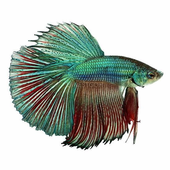 Fish Face 012