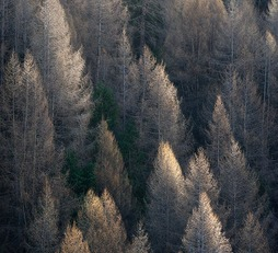 Trees I – Nature Collection