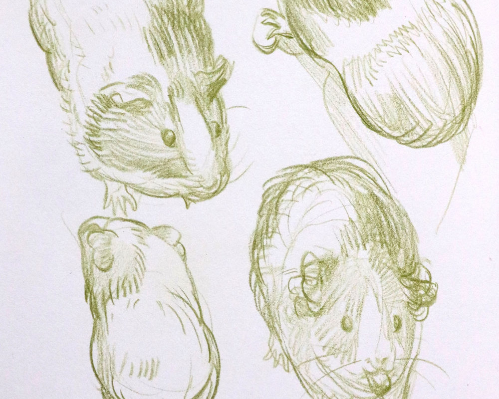 Creature Design Sketches, Julie Benbassat