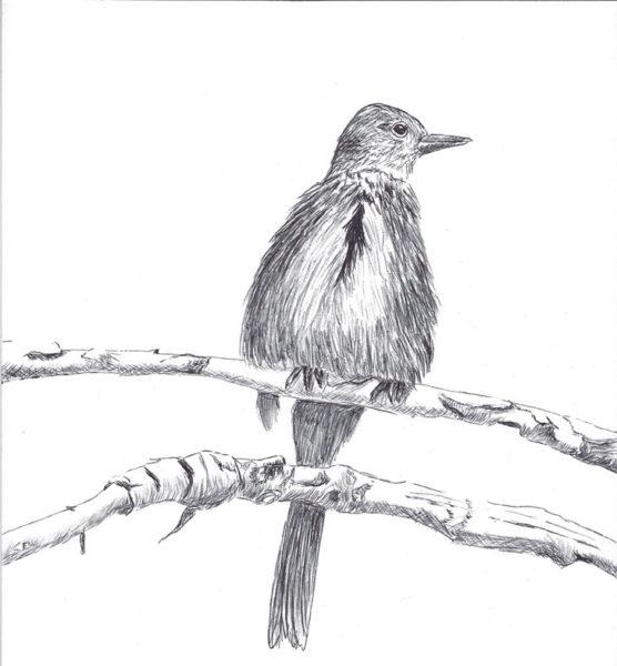 Lee Ann Delaney, Ballpoint Pen Drawing