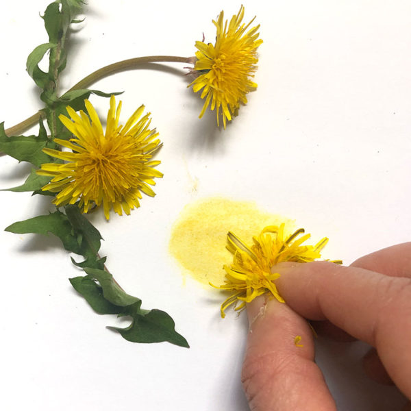 Home Art Supplies: Dandelions