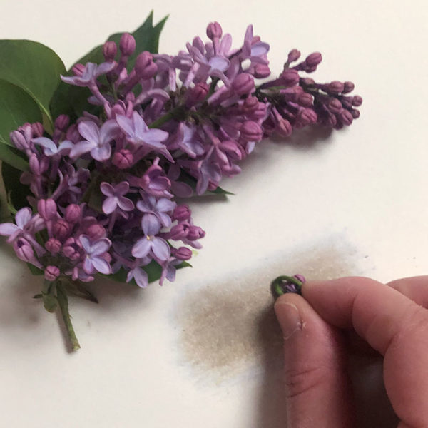 Home Art Supplies: Color with Lilac Flowers