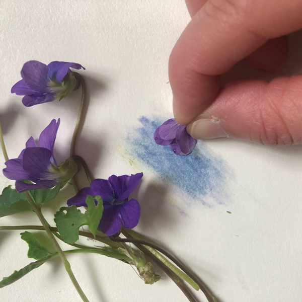 Home Art Supplies: Color with Violet Petals