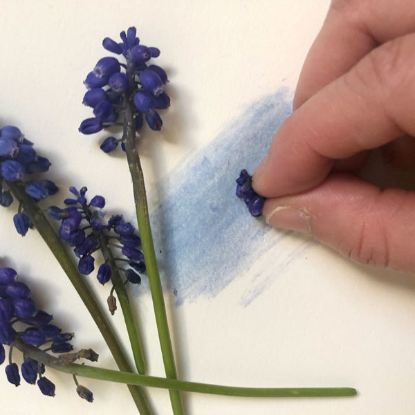 Home Art Supplies: Painting with Grape Hyacinths