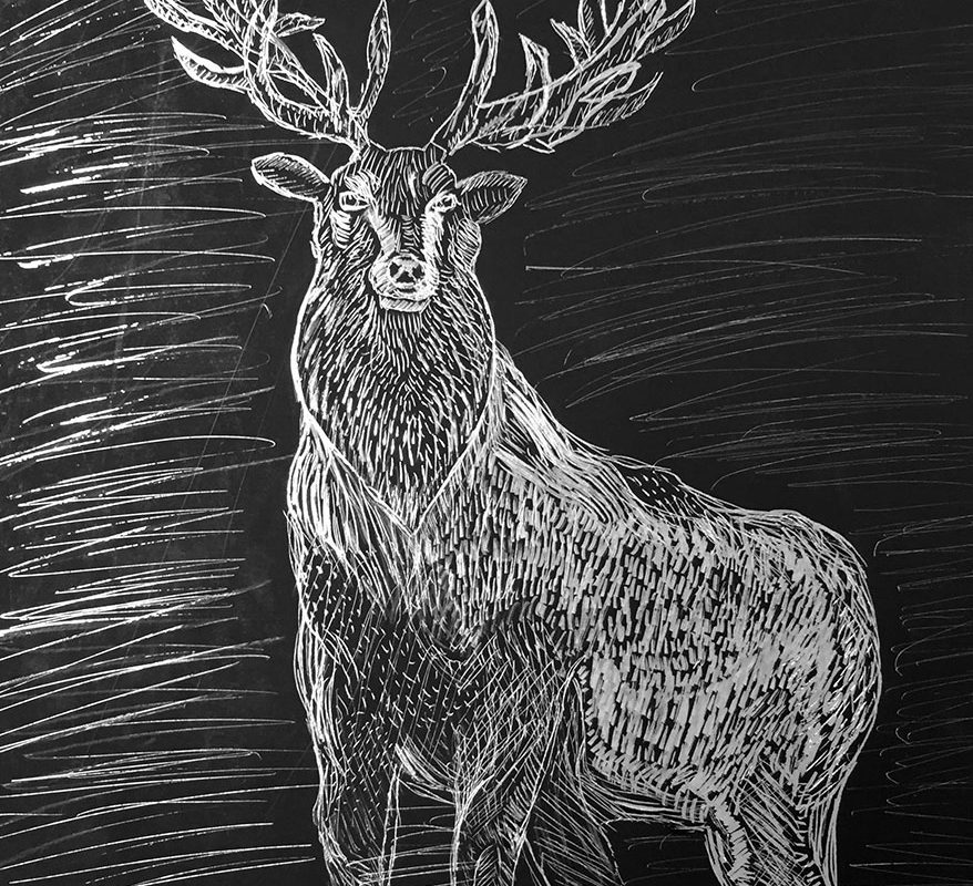 Scratchboard Drawing by a Student at Millis High School