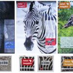 Art School Admissions Portfolio: Graphic Design