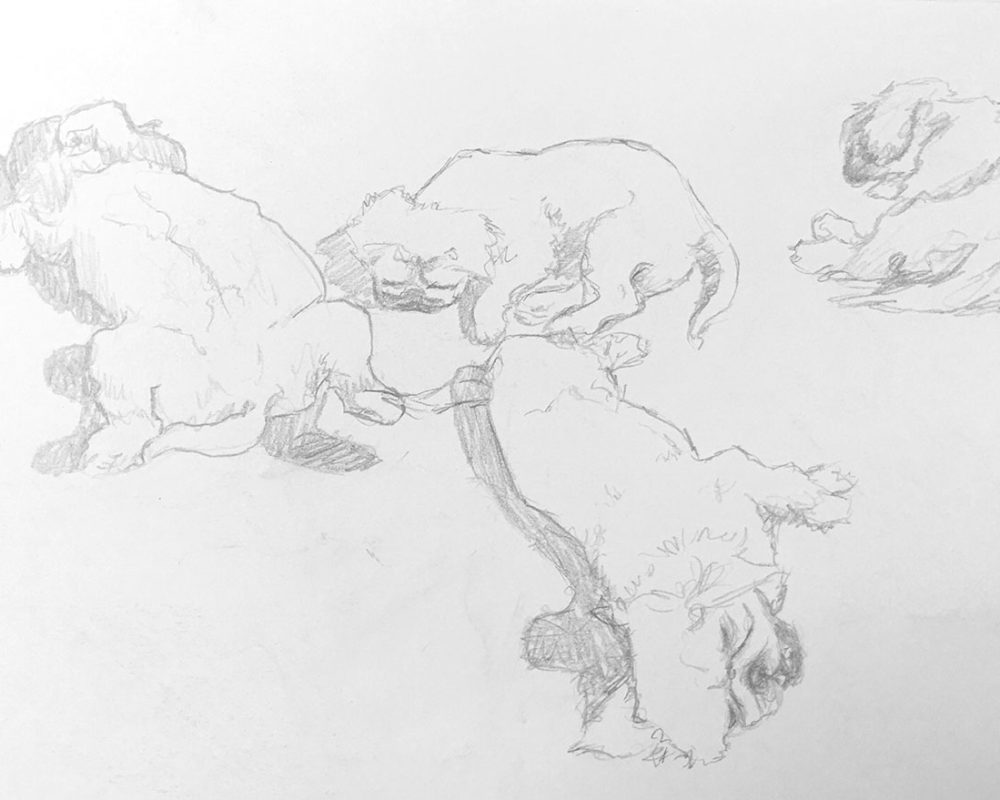Dog Sketches, graphite, Elise Ton