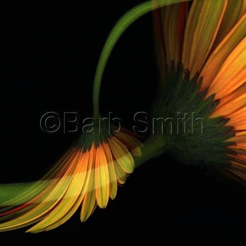 Barbara Smith: Art & Photograpy
