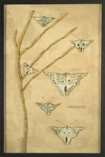 Lapidoptera Specimen box
