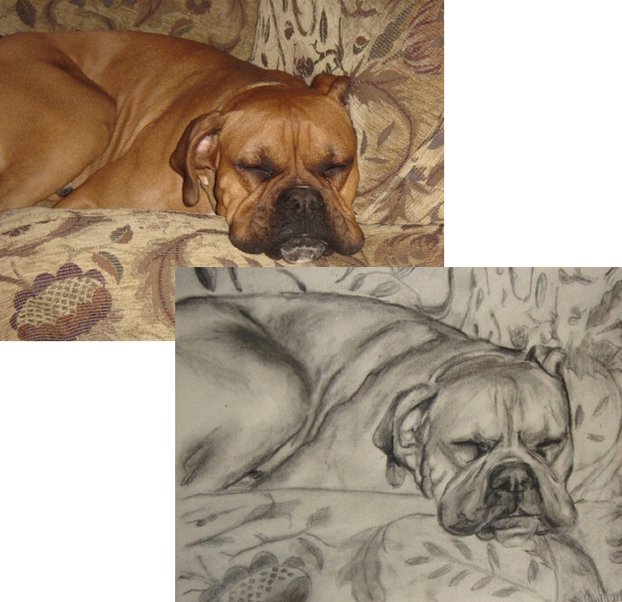 Custom Dog Charcoal Drawings - Claire Casseb, San Antonio Artist