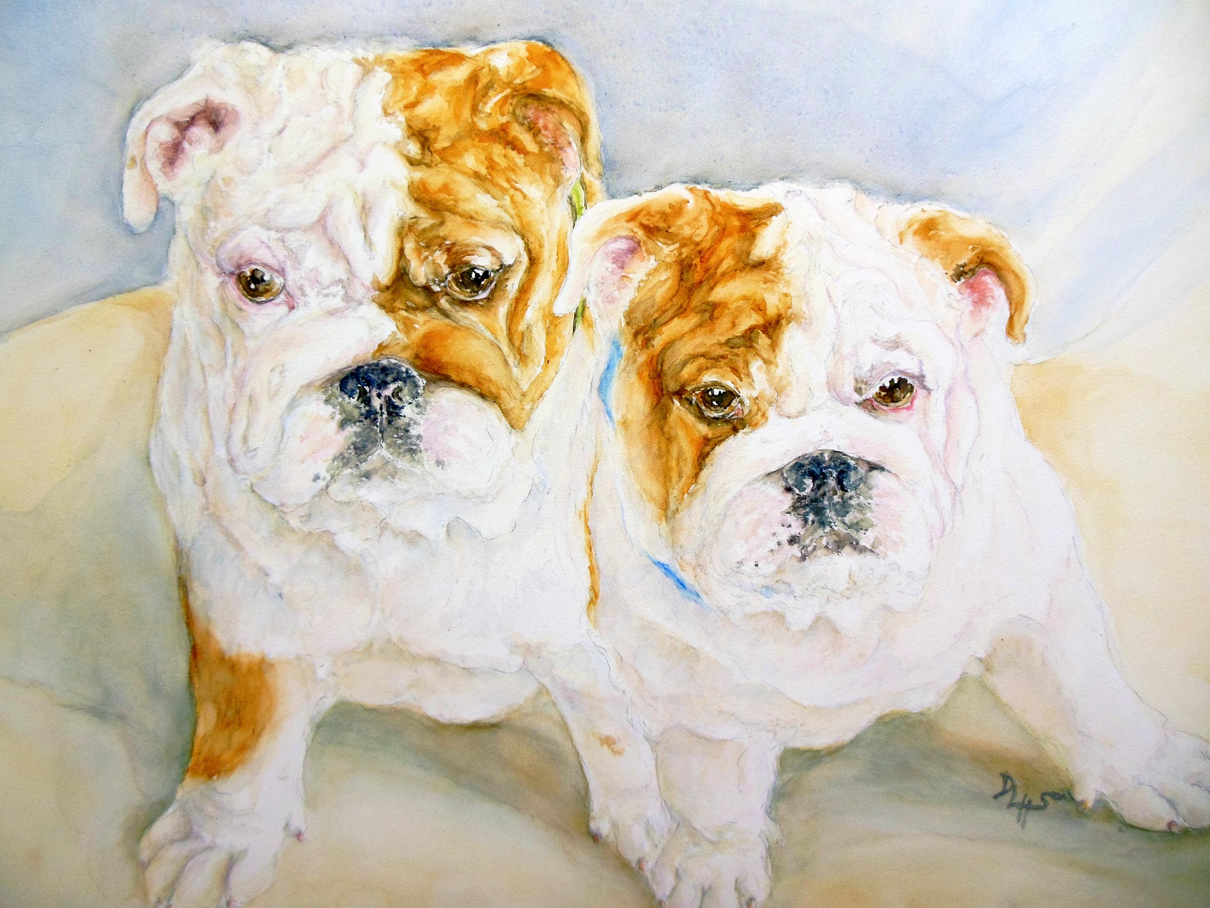 Rapsody in Wrinkles pair of English Bulldog puppies