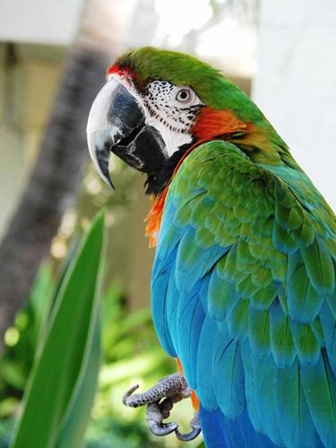 Parrot photograph