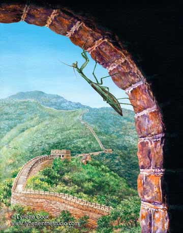 Great Wall Mantis