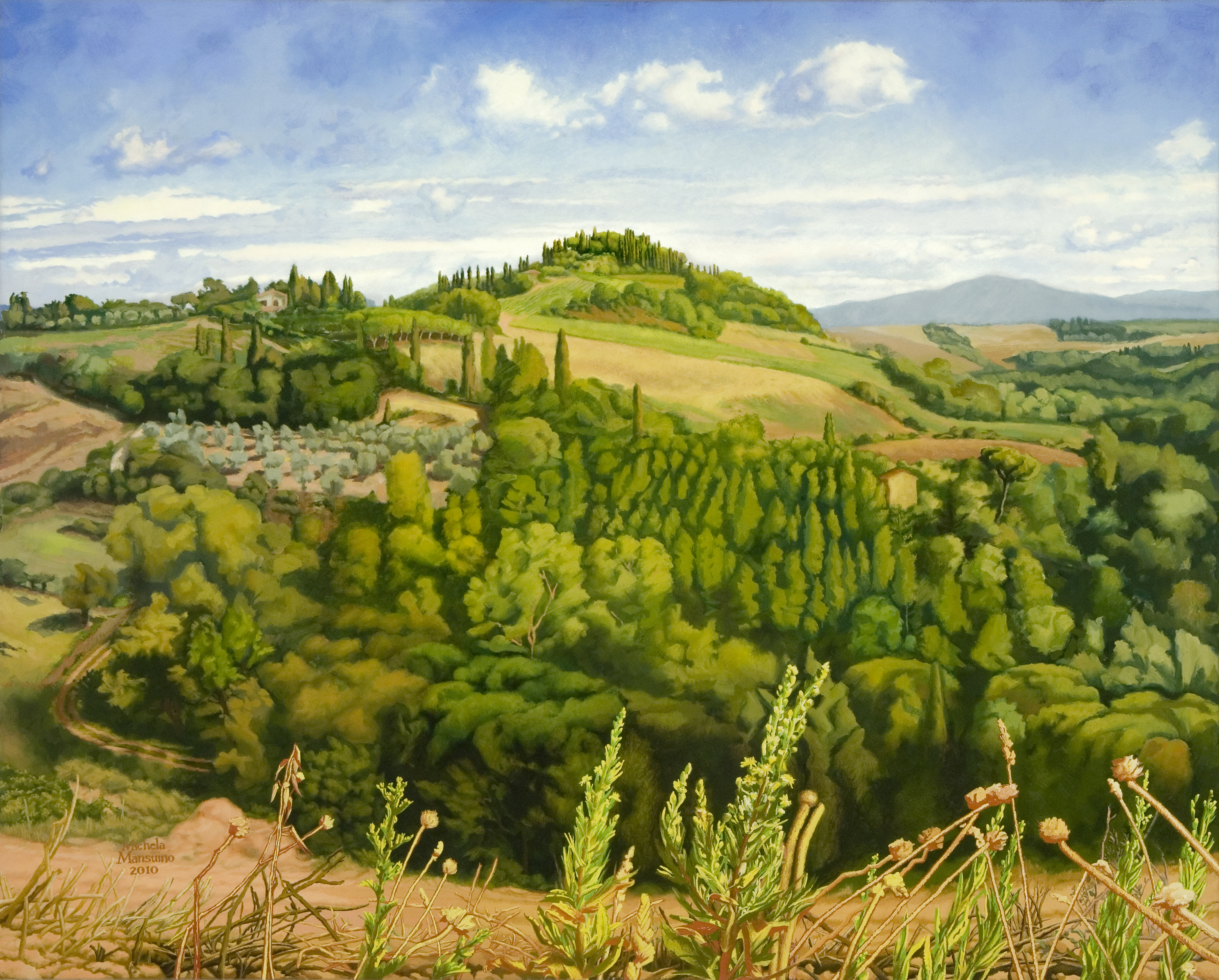 Panoramic View of The Vineyard Pietrafitta