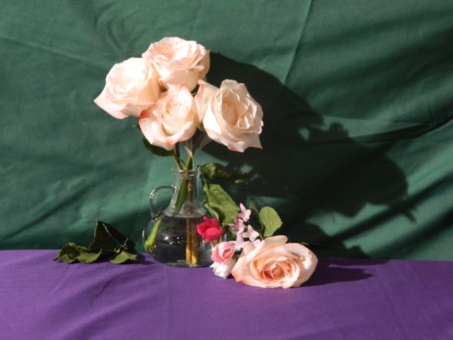 photograph of my still life set up