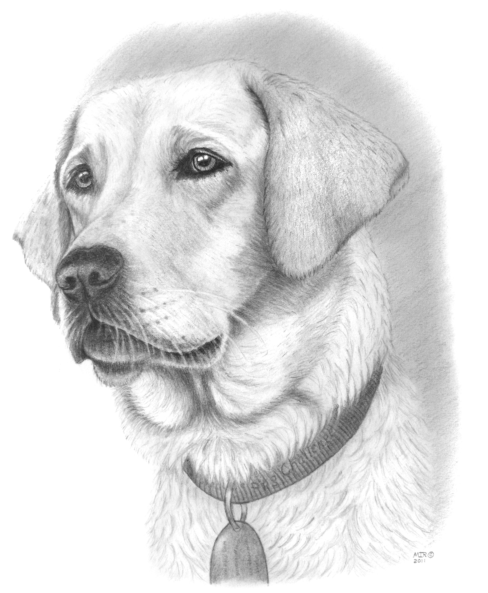 Dog Drawings In Pencil Images & Pictures - Becuo