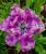 Naomi's Ohm ~ flowers, ferns and botanica