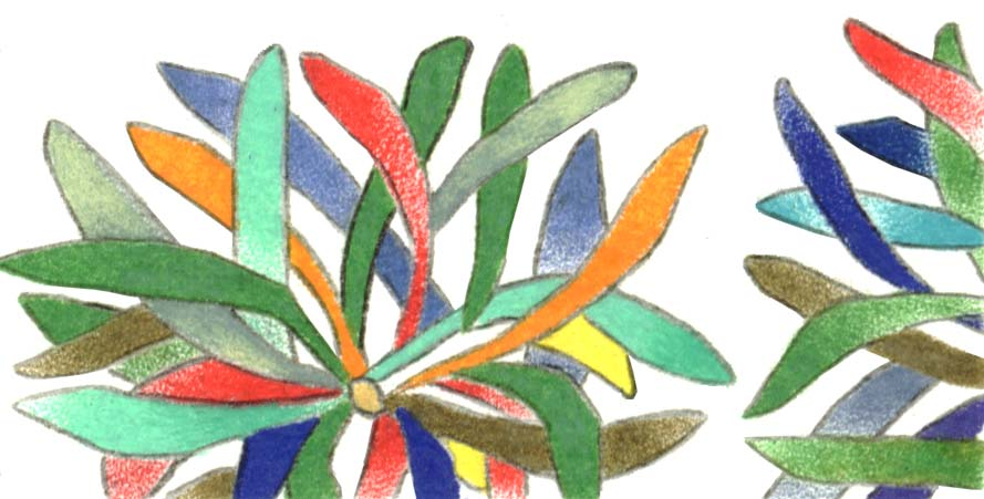plant drawing studies