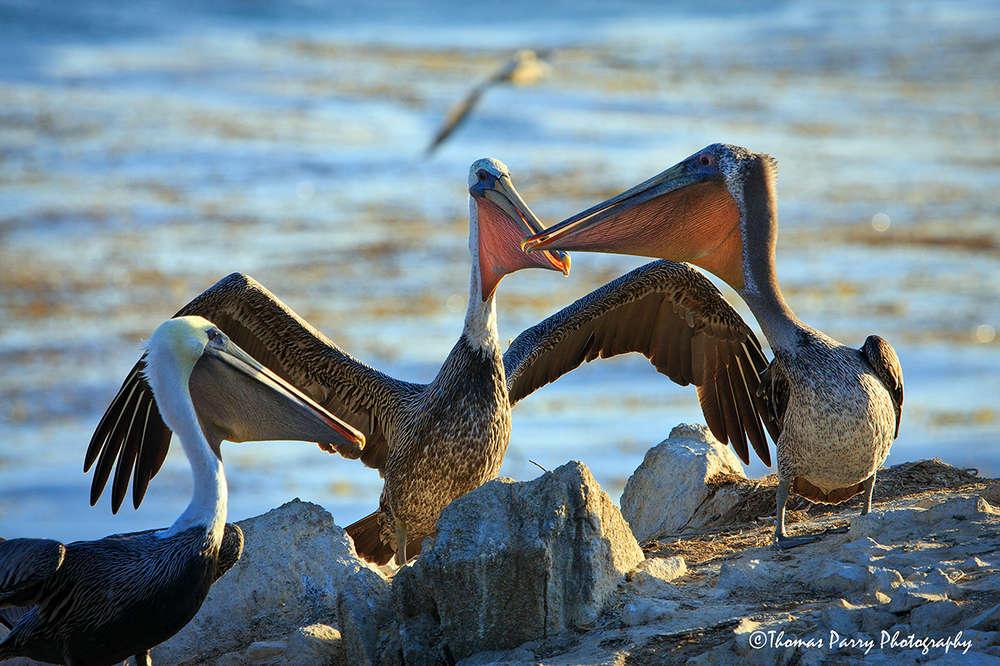 Pelican Pouches