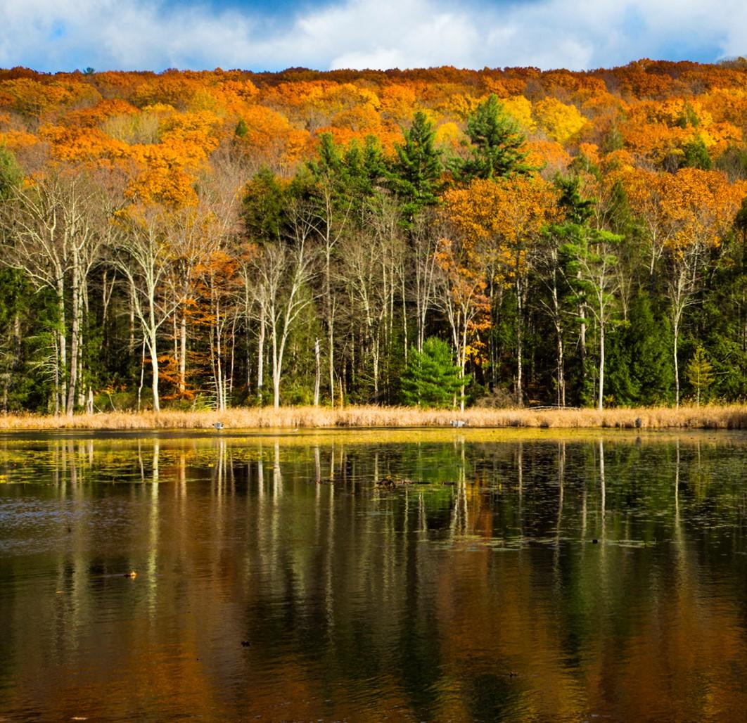 (image: Lenox Pond)