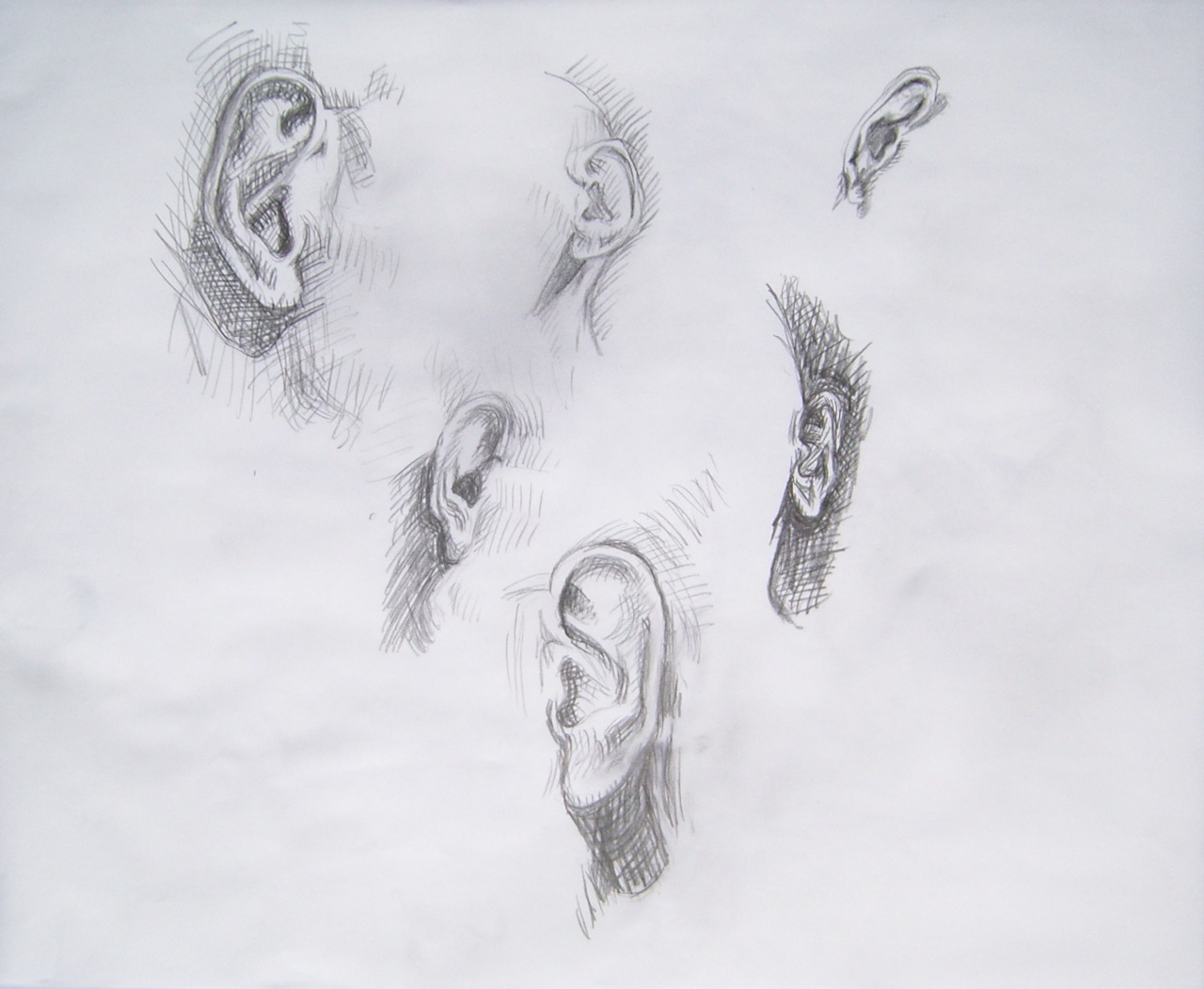 pencil drawing study of ears