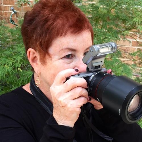 Sharon Brender Photography