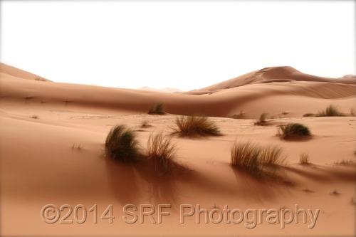 SRF Photography