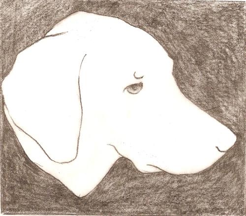 tina mullen @ silverdog studio