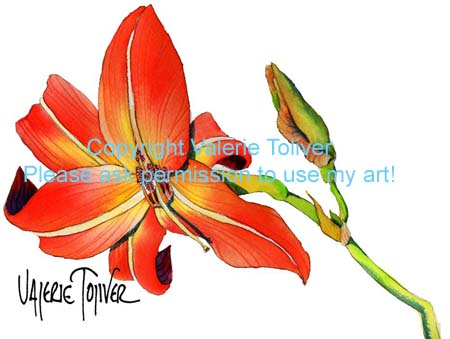 Red Lily Watercolor Painting by Valerie Toliver