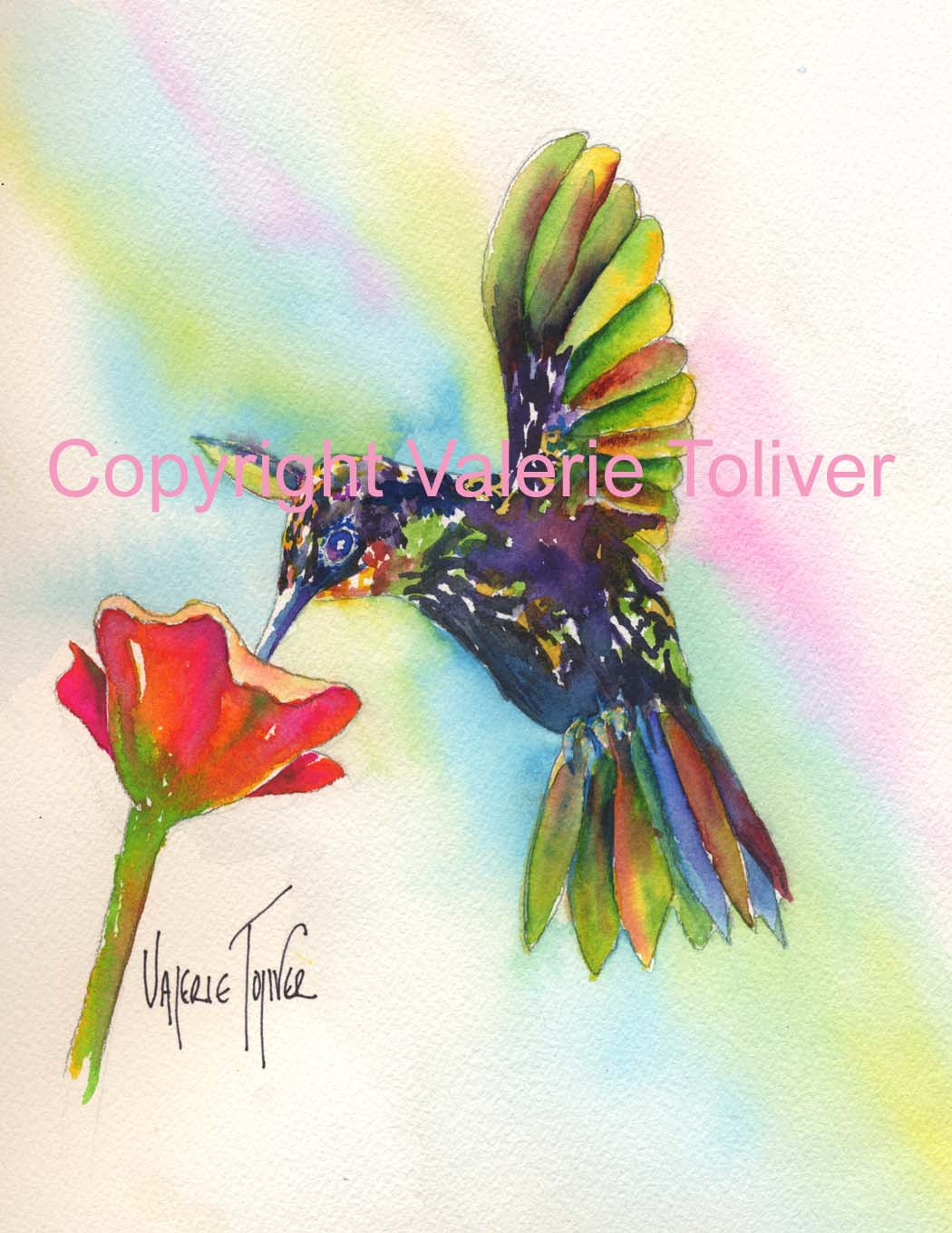 Humming Bird Watercolor Painting by Valerie Toliver