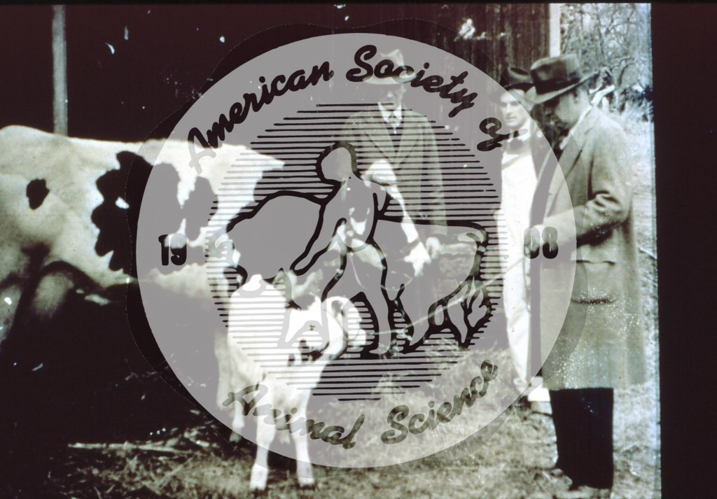 First calf born (February 15, 1939) from a US AI organization, on the Richard Schomp farm near Stanton, NJ., with semen from a bull in Clinton County (New Jersey) AI Cooperative, organized by Enos Perry.  [Left to right; Richard Schomp, Dr. James Henderson the veterinarian hired to collect semen and breed cows for the Coop, and Dwight Babbitt (Hunterdon County Extension Agent].