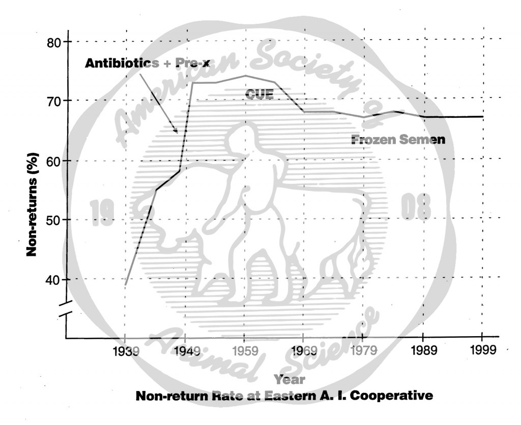 Fertility of artificial inseminations of cattle improved with some changes in technology at Eastern (formerly NY) Artificial Breeders Coop.  (Nonreturn rate = the percentage of cattle that did not return for a second service within a specified period after the first service, usually 60 to 90 days.)  Before 1949, ejaculated semen was slowly cooled to refrigerator temperature, and then extended with egg yolk citrate containing sulfanilamide.  During the late 1940's, ejaculated semen was extended with about four parts of egg yolk citrate containing sulfa plus antibiotics before it was cooled (Antibiotics + Pre-X).  CUE (Cornell University Extender) was designed for use at temperatures up to normal room temperature, but it was especially effective in prolonging the life expectancy of bull sperm at 5° Celsius.  While freezing preserved sperm indefinitely, it reduced fertility.